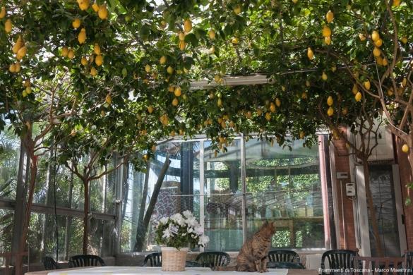 Il pergolato di splendidi agrumi