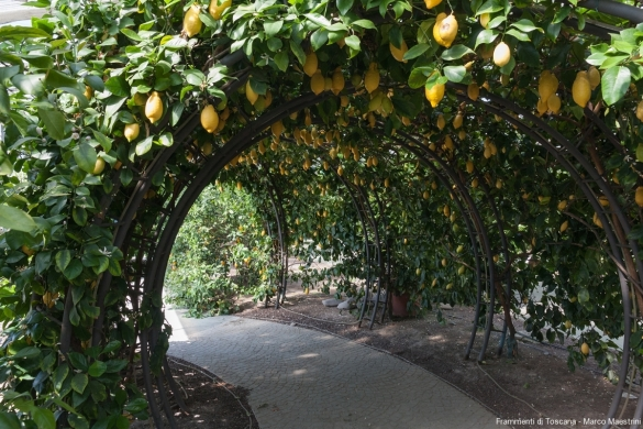 Interni del giardino
