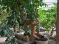 Pinocchio in giardino