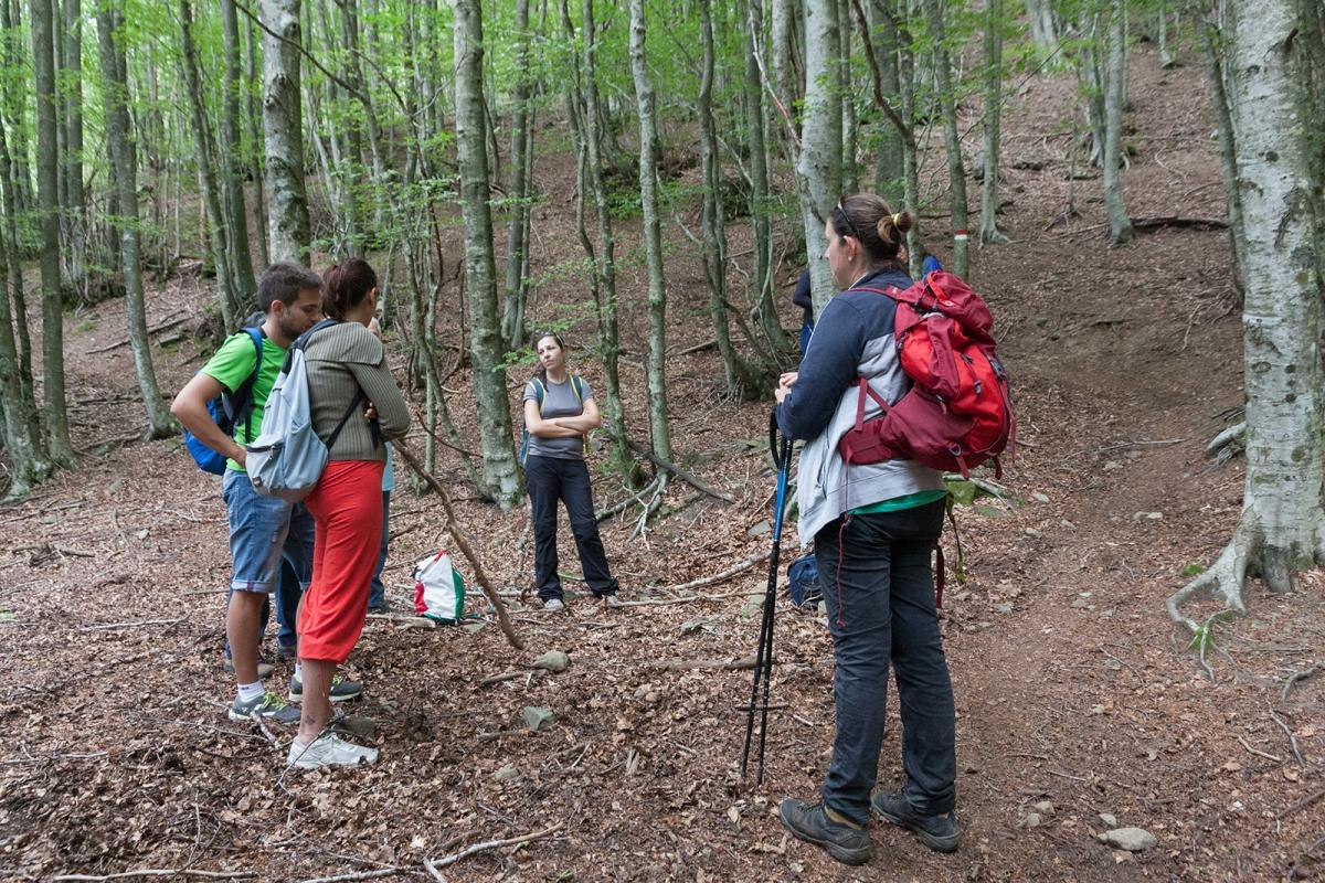Cammino di Dante - Il bosco