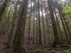 Foresta intorno Camaldoli