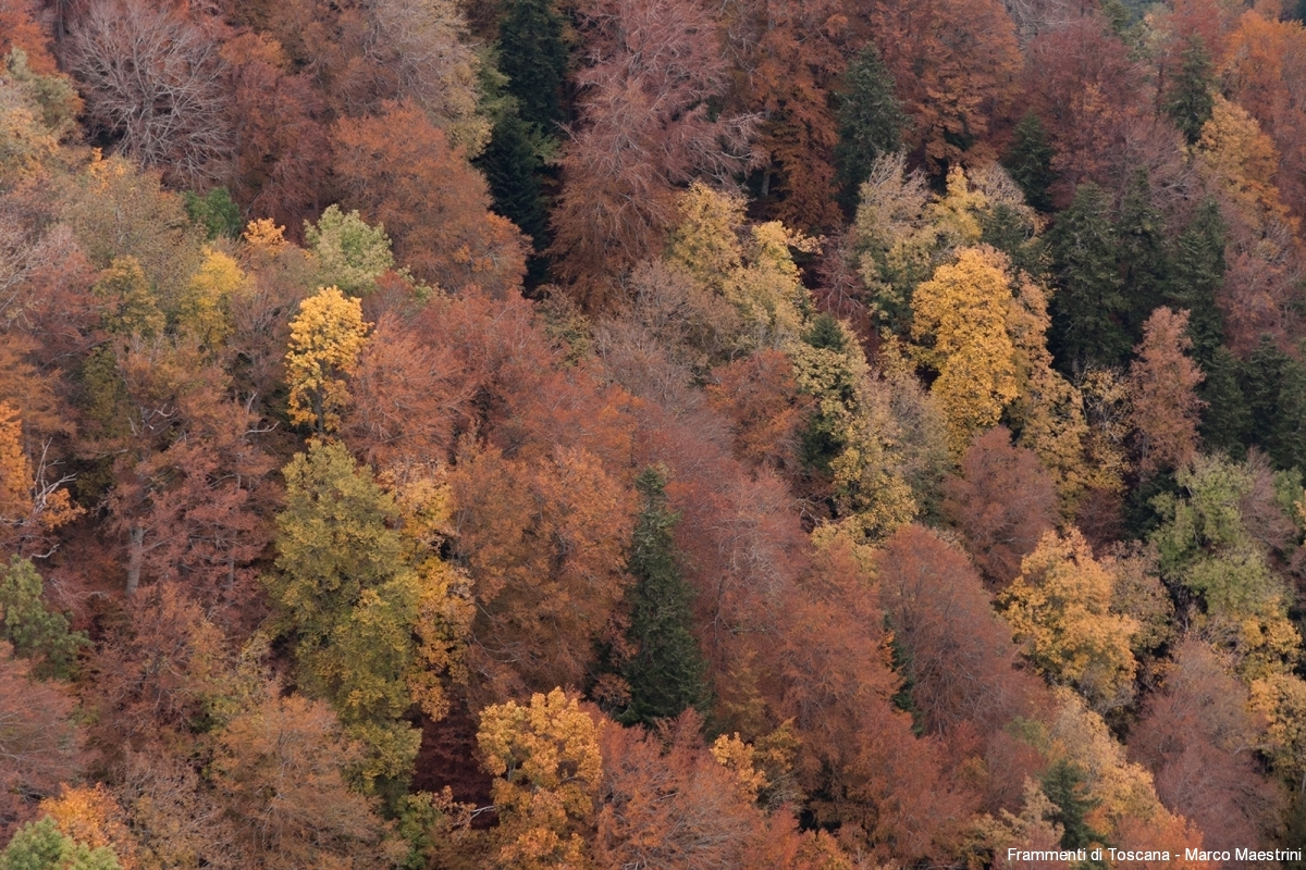 Il fall foliage in casentino
