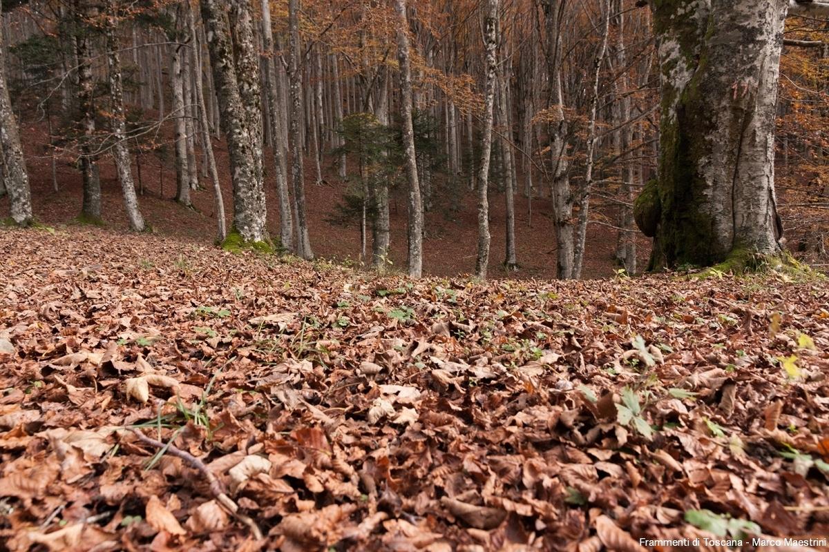 Il fall foliage in casentino