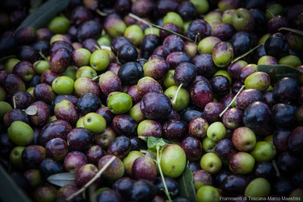 Raccolta delle olive - 16