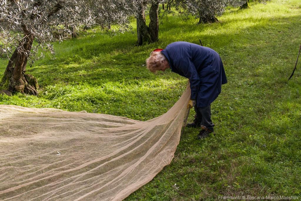 Raccolta delle olive - 3