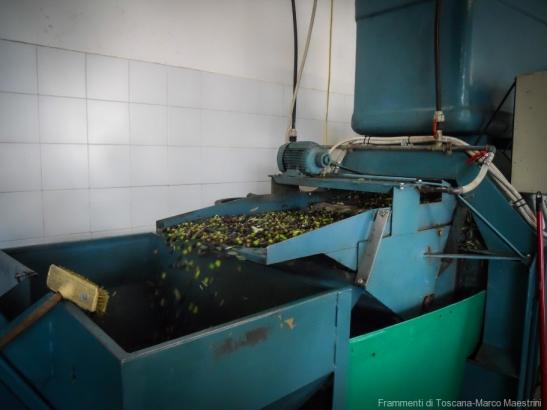 Raccolta delle olive - 17