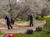 Raccolta delle olive - 8