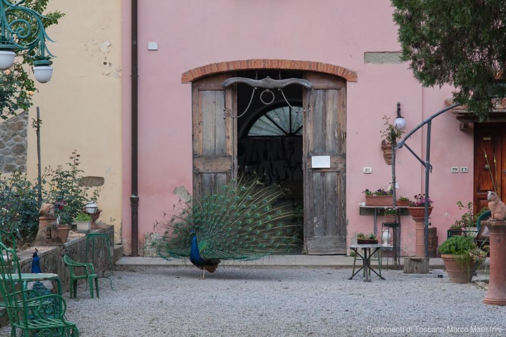 Roseto Fineschi