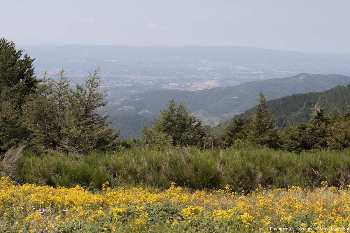 Vista sul Valdarno Pratomagno