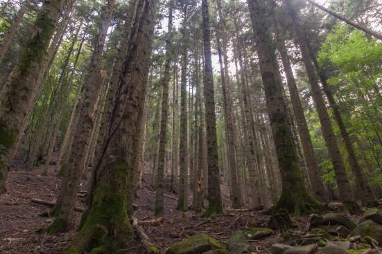 foresta-camaldoli
