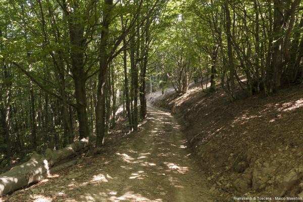 trekking-montelori-pratomagno